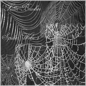 cobwebs spiders dusty spiderwebs orbwebs
