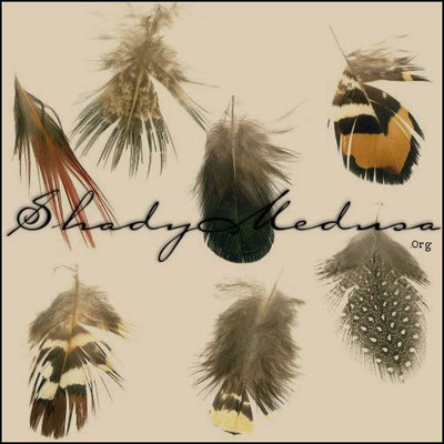 animals birds feathers nature plumage