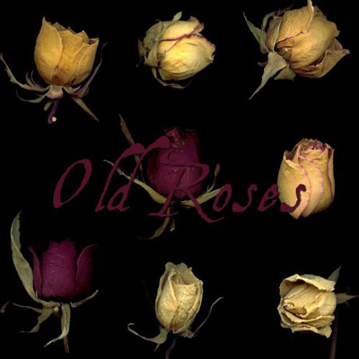 old roses dried flowers nature vegetal love lovers