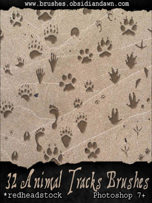 animals nature prints tracks armadillo bear beaver coyote crow deer fox dog housecat human opossum rabbit raccoon squirrel wolf foot