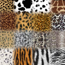 Photoshop: Animal prints (various animal prints and furs)