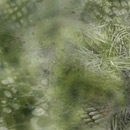 Photoshop: Nature textures (Various nature textures: snake scales, grass, sand… These are circular and faded at the edges for easy overlapping.)