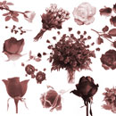 Photoshop: Bed of Roses (various and sundry rose brushes. Buds, blossoms, single stems and bouquets)