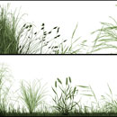 Photoshop: The Grasslands (herbes et graminées)