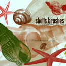 Photoshop: Shells (shells and starfish)