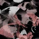 Photoshop: Butterfly Photoshop Brushes (papillons)