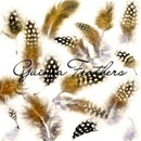 Photoshop: Guinea feathers (guinea feathers)