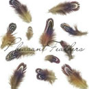 Photoshop: Pheasant feathers (pheasant feathers)