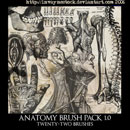 Photoshop: Anatomy Photoshop Brush Pack 1.0 (anatomy diagrams)