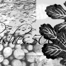 Photoshop: Patterns 2 (different kinds of vegetal items, leaves, seeds…)