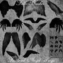 Photoshop: Feathered Angel Wings Photoshop Brushes (angel wings)