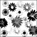 Photoshop: flower 01 (daisies and other flowers)