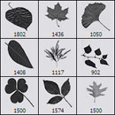 Photoshop: Leaves (various leaves: mulberry, maple, ginkgo biloba clover, alder...)