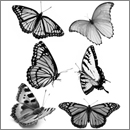 Photoshop: Butterfly Photoshop Brushes (Six brushes, each one featuring a different butterfly)