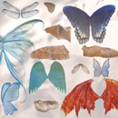 Photoshop: Wings (various types of wings: fairy, fairies angel, butterfly, insect, bat, demon/succubus, dragon, dragonfly…)