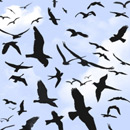 Photoshop: Birds flying (various flying birds)