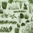 Photoshop: Grasses & plants (various grasses and plants)