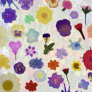 Photoshop: Pressed garden flowers (various garden pressed flowers)